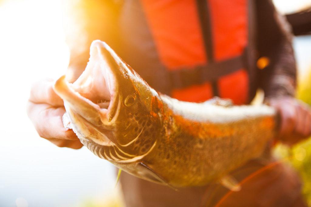 Lohi kalastajan käsissä